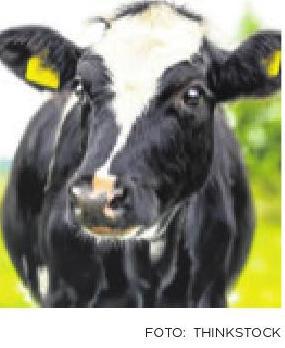 Digitalisering van de koe?